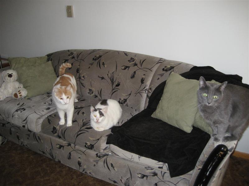 cats 004 (Medium).jpg