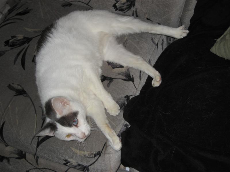 cats 007 (Medium).jpg