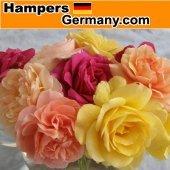 Hamgermany