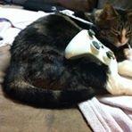 Xyla Cat